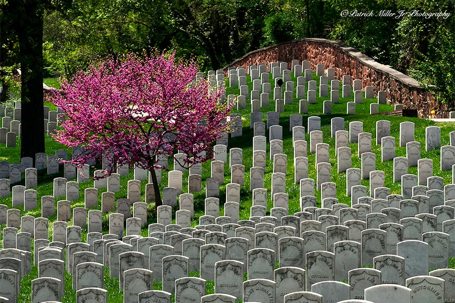 Headstones, flowing tree and original brick wall in the spring at Arlington National Cemetery, VA