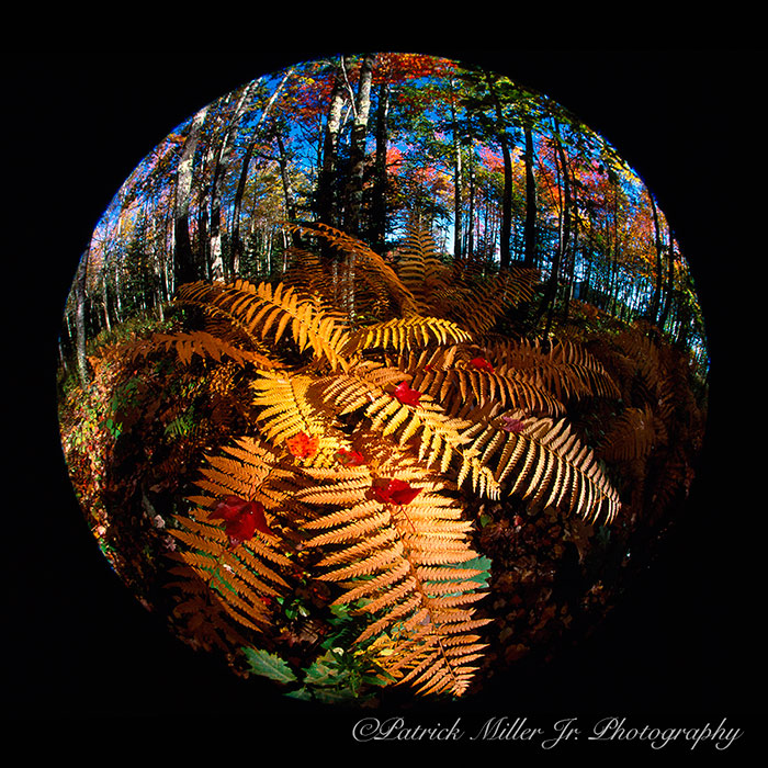 Autumn Colorful Ferns Fisheye