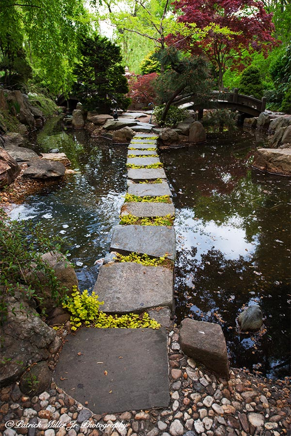 Stone path crossing a small pond Japanese Gardens