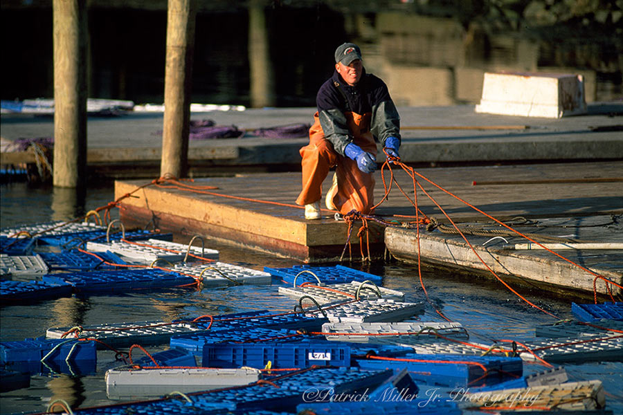 Lobsterman Pulling In Crates