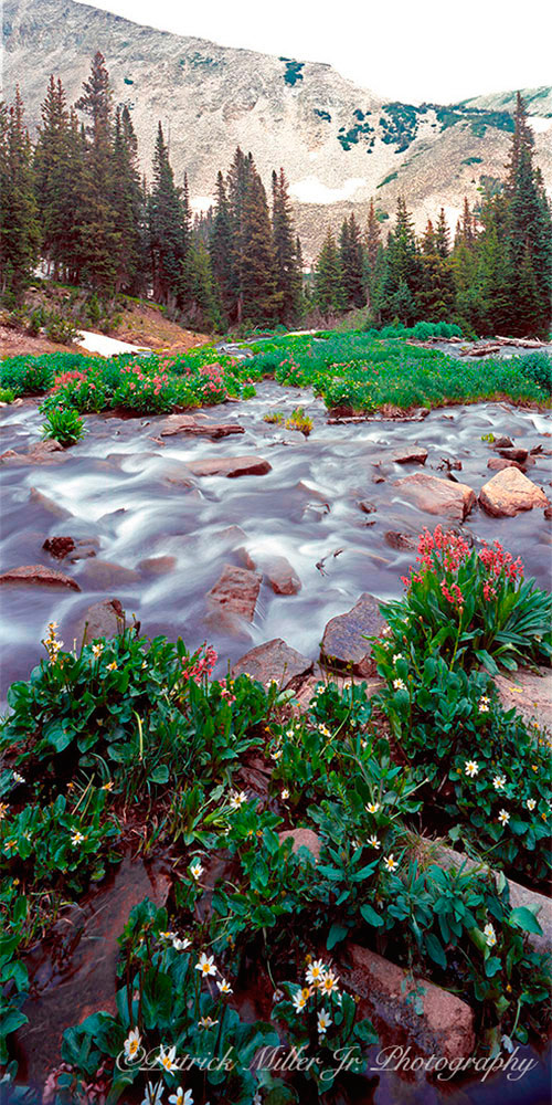 Glacier stream with wildflowers during the spring thaw in Colorado. Large Format Camera