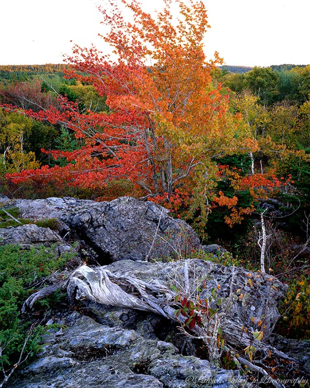 Tree with autumn foliage on a granite mountain top in New England.