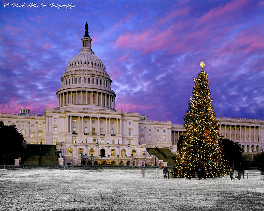 US Capitol Christmas Tree in winter with a vivid sky Washington, DC